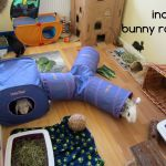 rabbit housing - ava (2) raw