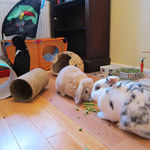 Rabbit housing - Bunnies on Holiday (2)