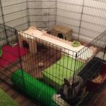 Rabbit Housing Sarah playpen