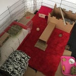 rabbit housing - indoor room