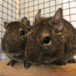 jeff and fred degu (2)