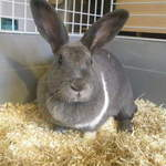 Tinkerbell Rabbit adoption Leeds