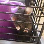 Mr T rescue mice leeds