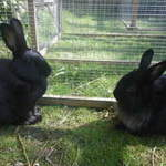 Ruth and Leon rabbit shelter