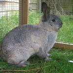 Maggie rabbit rescue Leeds