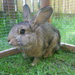 Henry rabbit shelter castleford