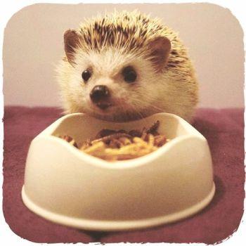 Beco Pets Bowl