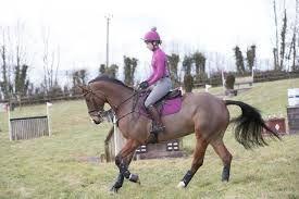 Lemieux CC/Jump Suede Saddlecloth