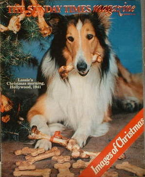 <!--1981-12-20-->The Sunday Times magazine - Lassie cover (20 December 1981