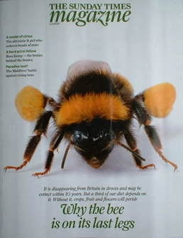 <!--2009-02-01-->The Sunday Times magazine - The Bee cover (1 February 2009