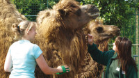 Red Letter Days have some offers on Zookeeper Experiences - click here for details