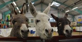 Come on a Donkey Care Training Course with the Donkey Sanctuary
