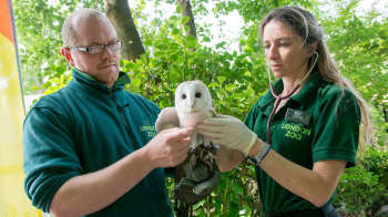 So what do zoo vets do?  Find out at the zoo!