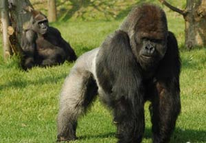 Go to the Buy a Gift store for more info on London Zoo & tickets