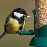 Feed the birds - click here to fly away to the RSPB's online shop