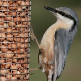 Fly away to the RSPB's online shop to buy all sorts of things for the birds in your garden