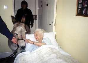 Diana the Donkey comes to visit