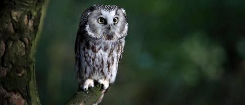Click here to find out about experiences with the Kent Owl Academy