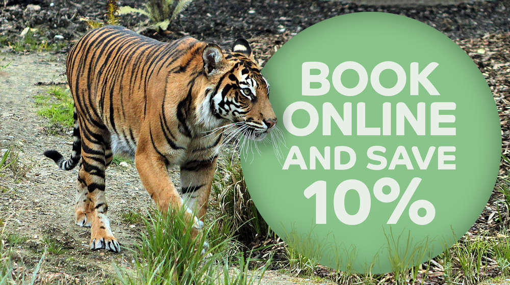Book online and save 10%