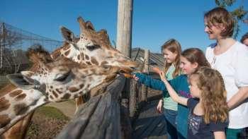 Meet the giraffes