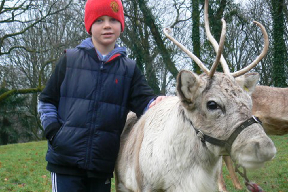 Meet a Reindeer at Dartmoor Zoo