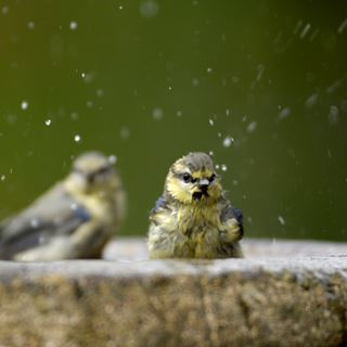Make a bird bath for the birds in your garden