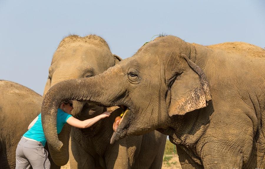 Volunteer for animals in India