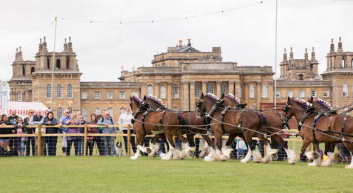 Enjoy the majestic Shire Horse Society at Countryfile Live