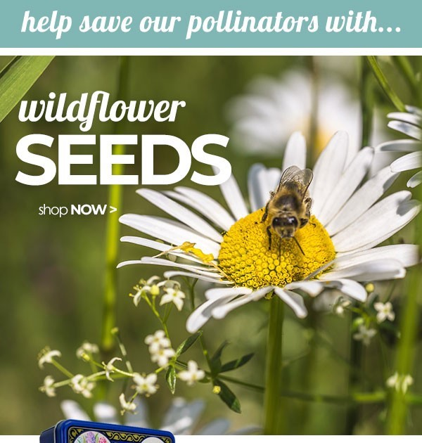 Wildflower Seeds from Suttons Seeds