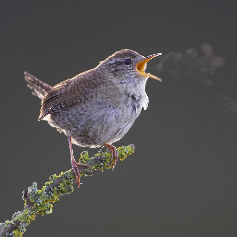 The 6th May is International Dawn Chorus Day