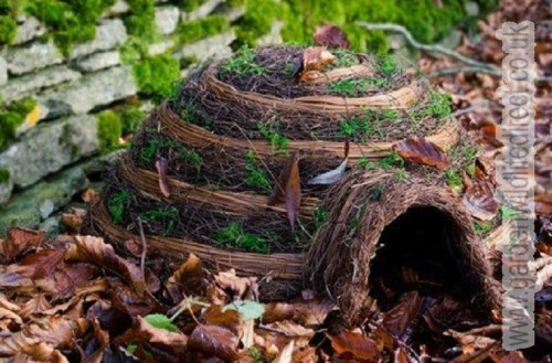 Give a hedgehog a home
