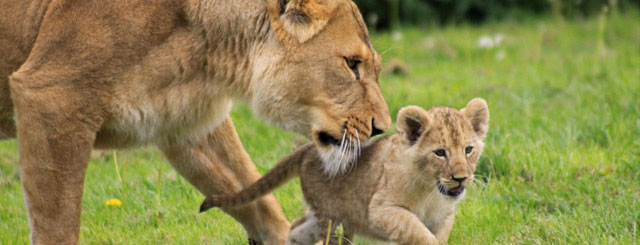 Grab the 30% off tickets at Longleat now - go to Picniq