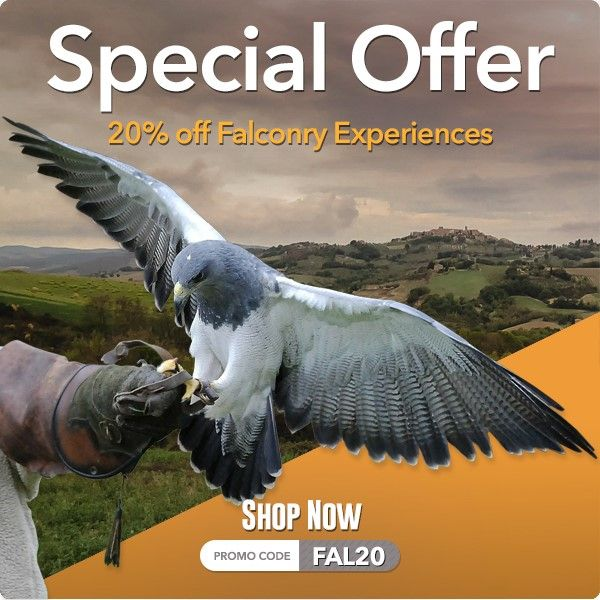 Special Offer - 20% off Falconry Experiences at Into the Blue