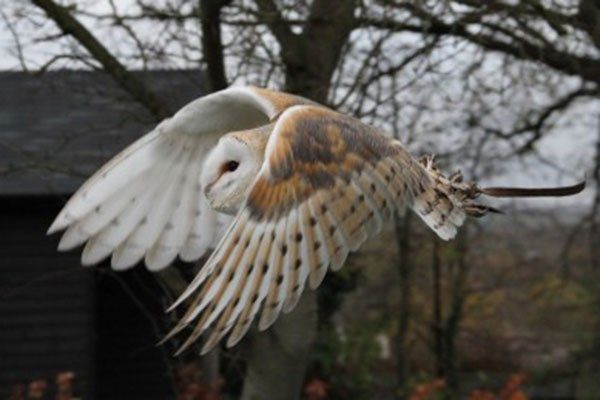 2for1 Woodland Walk and Owl Flying Experience at Lee Valley