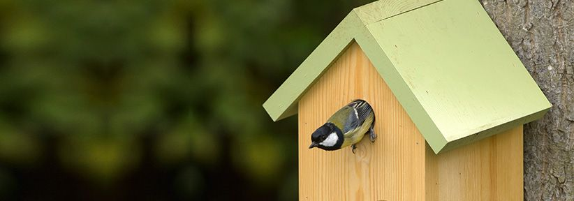 Give the birds in your garden a nest box