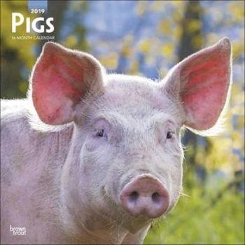 Pigs Calendar 2019