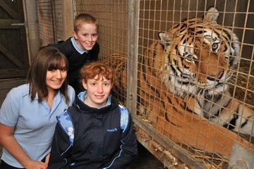 Tiger Encounter at Dartmoor Zoo in Devon