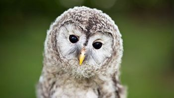Owl Encounter for Two in Sussex