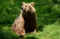 Meet Hayley in Devon with this Bear Encounter