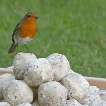 Super suet balls from the RSPB