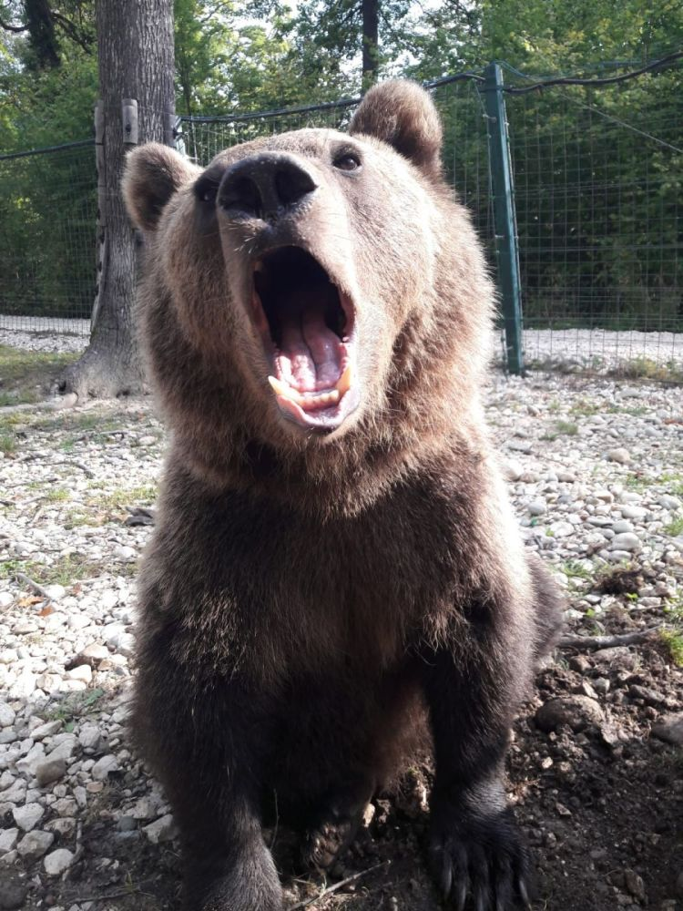 Volunteer with Bears for World Animal Protection
