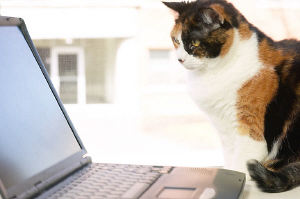 Click here to find your local Cats Protection