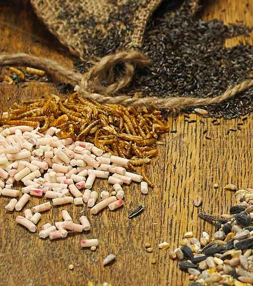 Bird food offers from the RSPB Online Shop