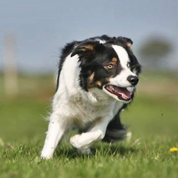 A Sheepdog Experience is one of the animal experiences available at Into the Blue