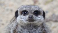 Special offers on Meerkat Encounters