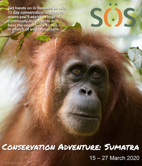 Get hands on in Sumatra with a 13 day conservation adventure