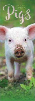 Pigs Slim Calendar 2020 from the CalendarClub.co.uk