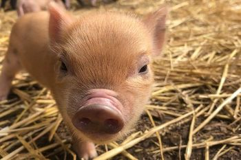 Great piggy news!  15% off at BuyaGift from 23 to 30 September 2019