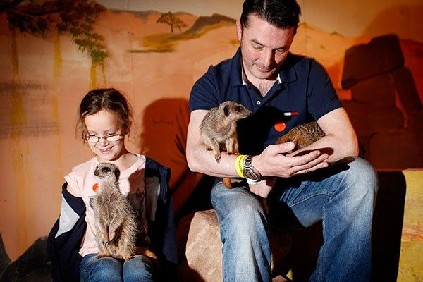 Get 15% off this 2 for 1 Meet the Meerkats Experience