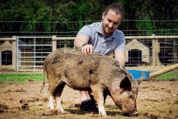 WATCH VIDEO Pig Enthusiast Experience for Two at Kew Little Pigs